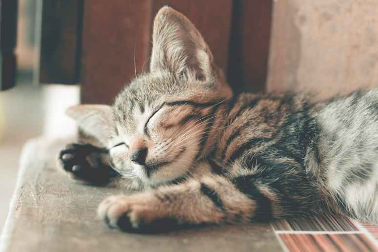 close up photography of sleeping tabby cat